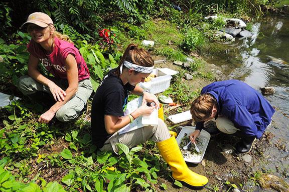 Field work program students